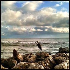 Bird on the Capitva rocks | by luciwest, via Flickr
