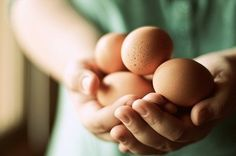 farm fresh eggs:  farm fresh eggs
