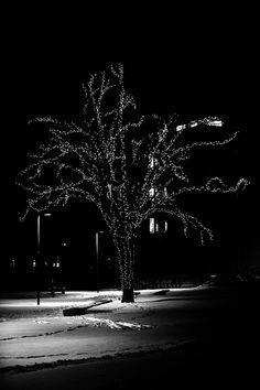 Christmas tree, Tønsberg, Norway