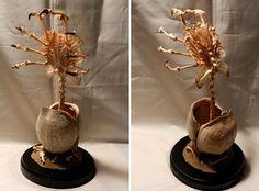 Alien Facehugger Made of Animal Bones