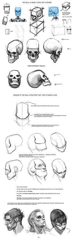 facial anatomy tips