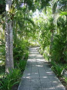 Ernest Hemingway's garden path, Havana, Cuba