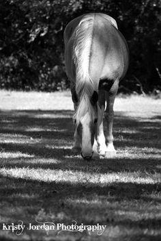 Grazer by Kristyjphotography on Etsy, $25.00
