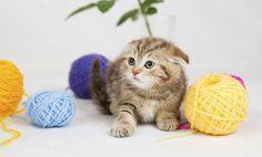 ¿Gatos tímidos o miedosos?