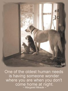the doors, cat, dogs, front door, dog quot, pet, homes, friend, animal