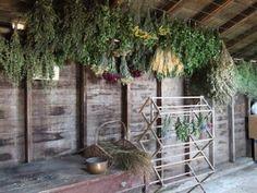 Drying Herbs - Herbs - Dried Herbs - Barn