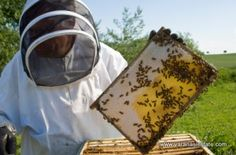 """Varanasi Estate started a new series of posts named """"#Beekeeping 101"""", yesterday we discussed """"Benefits of Beekeeping"""", today we are discussing about beekeepers and several aspects of being a beekeeper. Read on to know more:"""