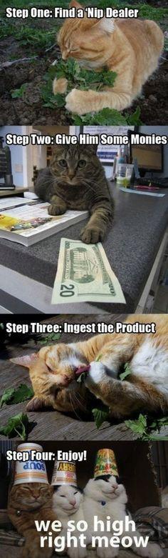 Cute stoner kitties