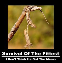 Day 422: Survival of the Fittest -or of The Most Dishonest Ones? « Money Matters