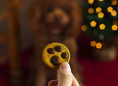 For Dogs Only ... Paw Print Dog Treats. Super cute, extra-easy treats—featuring paw prints made with melted carob and peanut butter