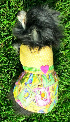 Dog  Dress Cotton Toy Breed Made to Order  by BloomingtailsDogDuds, $23.95