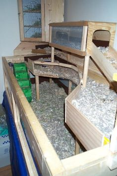 - Guinea Pig Cage Photos, oh the things you can build if you have a handy husband!