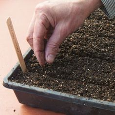 How to make your own seed-starting mix.
