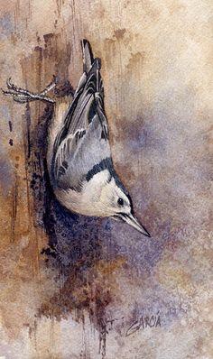 Nuthatch by Joe Garcia Watercolor