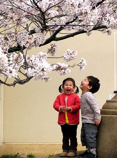 cherri, bodi smile, happi, joke, beauti, babi, medicin, laughter, cherry blossoms