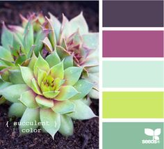 succulent color pallet: GORGEOUS!