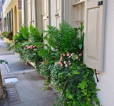 More window boxes on Tradd Street in Charleston...