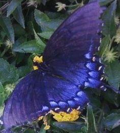 Butterflies...in the summer