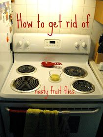 Freshly Completed: How to Get Rid of Fruit Flies