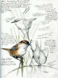 birds in a journal