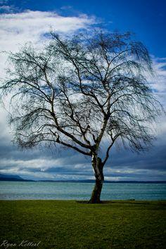 maritime park      #ocean #trees #blues
