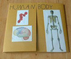 Lapbooks, ideas para presentar proyectos