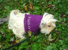 Buddy's Purple Stitch Pattern Sweater
