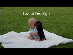 Yorkie Puppy and Baby Boy: Love at First Sight