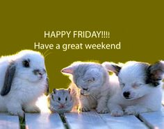 Have a great weekend quotes cute animals quote pets friday days of the week cat. dog