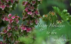 Happy Holiday wallpaper digital download by newmexicomtngirl, $3.00