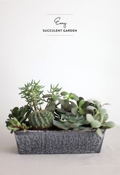 an Easy Succulent Garden DIY - perfect for all you weekend warriors: How To Instructions Here: http://www.stylemepretty.com/living/2013/04/05/diy-succulent-garden | DIY Project on #SMPLiving