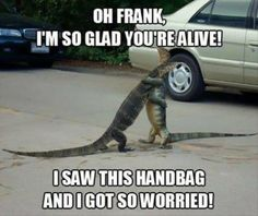 funny pictures lizards