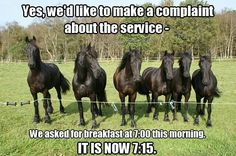This reminds me of our horses at school - lined up at the fence well before dinnertime!