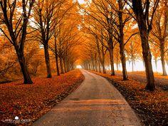 autumn pictur, autumn leaves, tree, season, color, driveway, path, place, roads