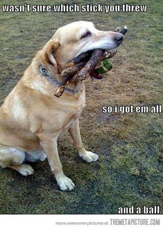 This is why I love dogs :)