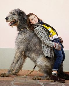 5 Dogs Bigger than their owners, Beautiful Creatures :)