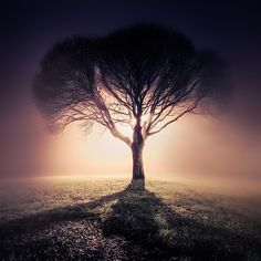 "First of the ""i n f i n i t y"" series by Mikko Lagerstedt, via Behance. #mikko_lagerstedt #infinity #photography #trees #light #shadows #silhouettes #fog"