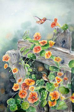 original watercolor of hummingbirds and nasturtium on old fence