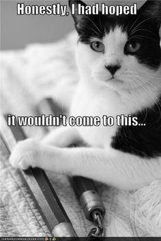 cats, funni cat, funniest stuff, anim, humor, nunchuck, cat stuff, kitti, kitty