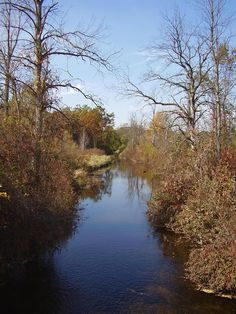 """Sharon Morris submitted this photo taken of a tributary of the Davis Creek Watershed in Oct. 2011. Morris wrote: """"I feel it represents the untouched natural area that exists in Oakland County."""""""