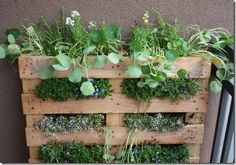 Herb planter made from an old pallet