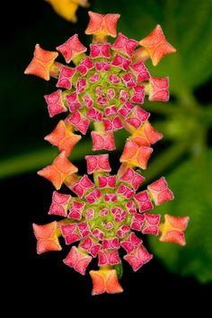 Flowers Like Jeweled Carpet