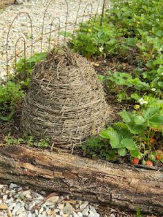 mother, beeskep, strawberri patch, bee skep