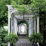 Olmsted Brothers Landscape | Garden and Gun