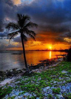 Cayman palm sunset