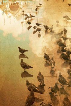 bird, squar, art photographi, fine art photography, tuscany italy, venice italy, kitchen, italy travel, travel photography