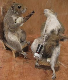 animals playing banjo - photo #14