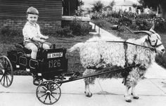 goats, time, wagon, children, goat boy, door, mid 1920s, historical photos with animals, travel photograph