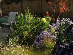 Laissez-faire Garden Design: A Long Conversation with Nature by Evelyn Hadden