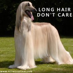 Save up to 50% when you shop for pet products at Petmountain.com!!! #Petm Dog grooming products I Dog meme I cheap pet products I funny animal meme I Long hair